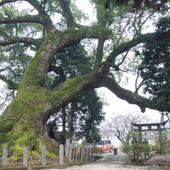 白角折(おしとり)神社